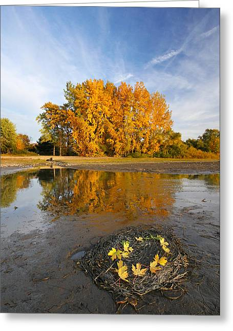 Autumn Nest Greeting Card by Mircea Costina Photography