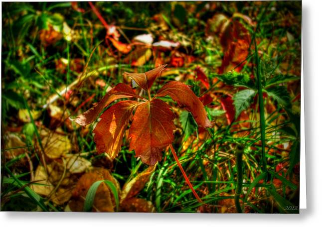Prescott Greeting Cards - Autumn on the Forest Floor Greeting Card by Aaron Burrows