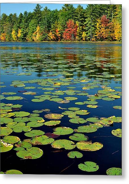 Autumn On The River Greeting Card by Rick Frost