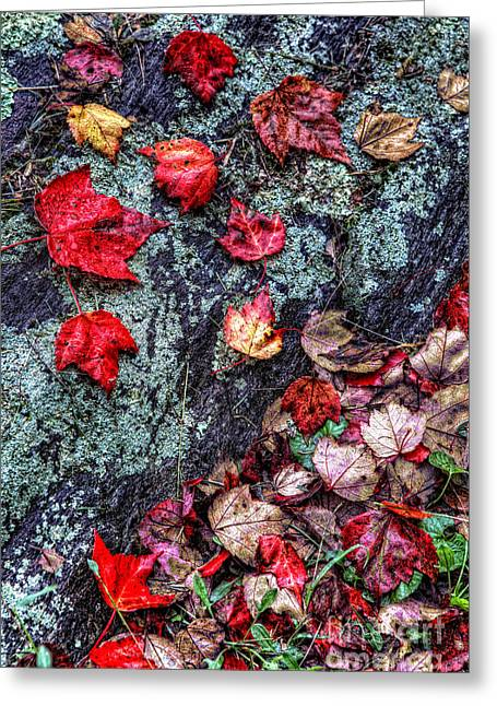 Stone Steps Greeting Cards - Autumn on the Rocks Greeting Card by Dan Carmichael