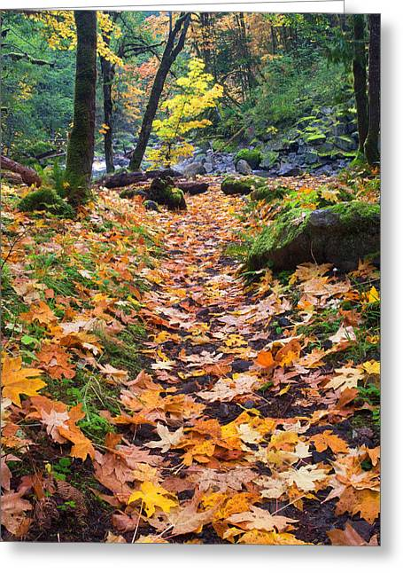 Path Greeting Cards - Autumn Path Greeting Card by Mike  Dawson