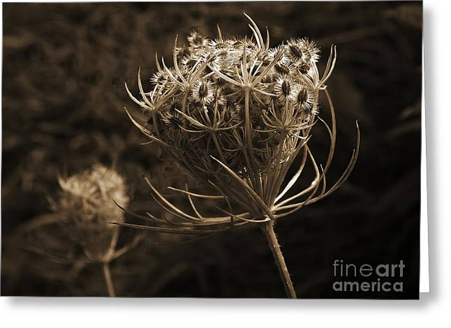 Autumn Photographs Photographs Greeting Cards - Autumn pod Greeting Card by Jim Wright