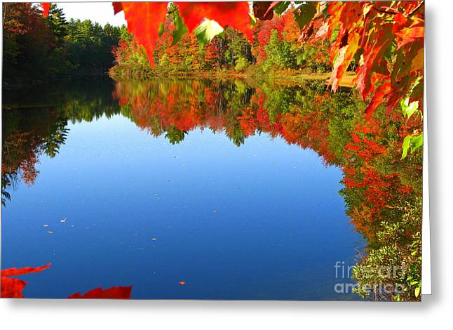 Lloyd Alexander Greeting Cards - Autumn Pond Greeting Card by Lloyd Alexander