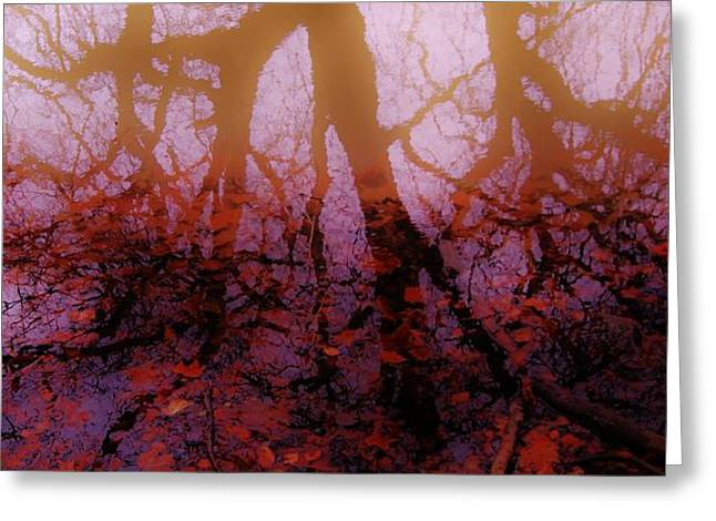 Autumn Reflections  Greeting Card by Xoanxo Cespon