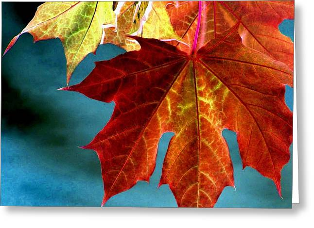 Dazzling Blue Greeting Cards - Autumn Regalia Greeting Card by Will Borden