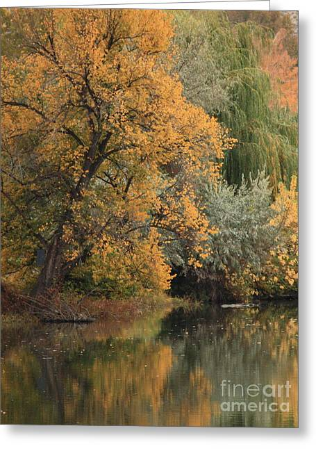 Pnw Greeting Cards - Autumn Riverbank Greeting Card by Carol Groenen