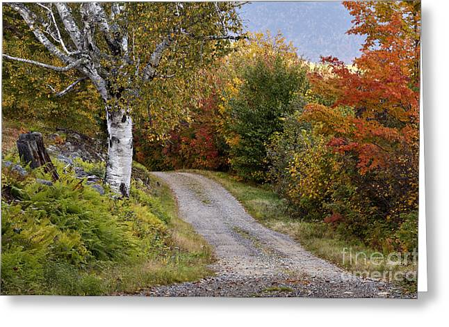 Gravel Road Greeting Cards - Autumn Road - D005840 Greeting Card by Daniel Dempster