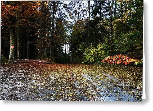 Photos Of Autumn Greeting Cards - Autumn Scene Greeting Card by Bruno Santoro