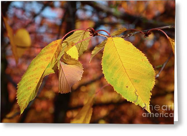 Autumn Sheets Greeting Cards - Autumn sheets Greeting Card by Bruno Santoro