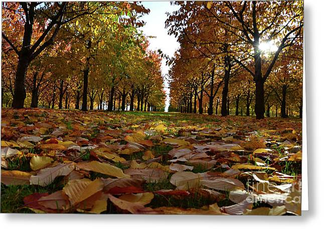 Autumn Sheets Greeting Cards - Autumn sheets carpet Greeting Card by Bruno Santoro
