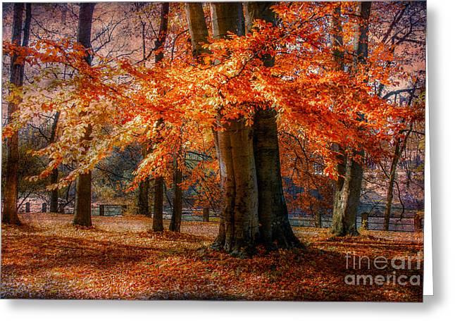 autumn skirt III Greeting Card by Hannes Cmarits
