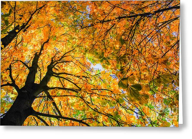 Autumn Sky Greeting Card by Hannes Cmarits
