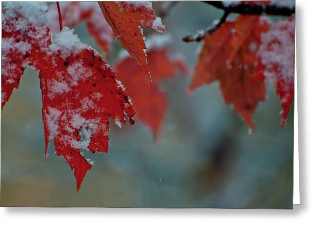 Gold Leave Greeting Cards - Autumn Snow Greeting Card by Venura Herath