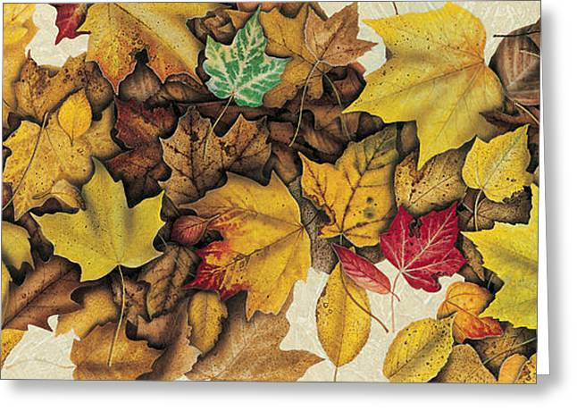 Leaves Colors Greeting Cards - Autumn Splendor Greeting Card by JQ Licensing