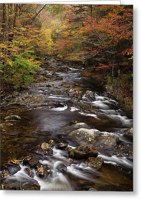 Tennessee River Greeting Cards - Autumn Stream Greeting Card by Andrew Soundarajan