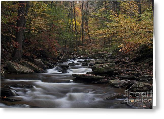 Stream Greeting Cards - Autumn Stream brook at Ricketts Glen State Park Greeting Card by Robert Wirth