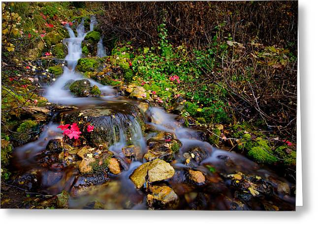 Scenery Greeting Cards - Autumn Stream Greeting Card by Chad Dutson