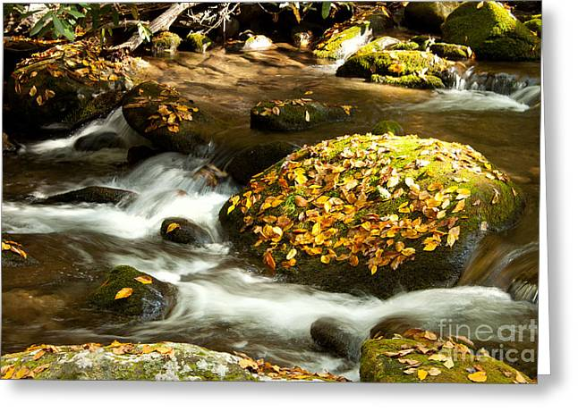 Tennessee River Greeting Cards - Autumn Stream Greeting Card by Lena Auxier