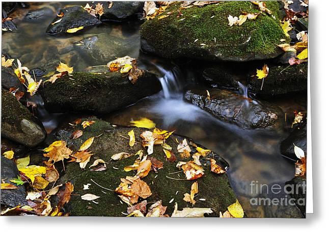 Autumn Stream Monongahela National Forest Greeting Card by Thomas R Fletcher