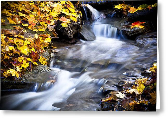 Fallen Leaf Greeting Cards - Autumn Stream No 2 Greeting Card by Kamil Swiatek