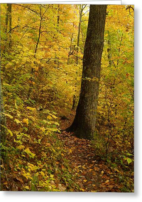Jeff Moose Greeting Cards - Autumn Stroll Greeting Card by Jeff Moose