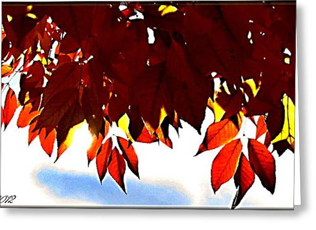 Autumn Sun Glory Greeting Card by Danielle  Parent