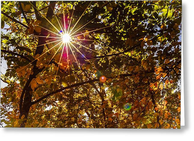 Flare-up Greeting Cards - Autumn Sunburst Greeting Card by Carolyn Marshall