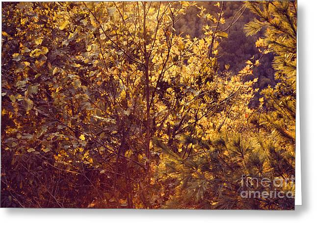 Sunset Abstract Greeting Cards - Autumn Sunset #1 Greeting Card by HD Connelly