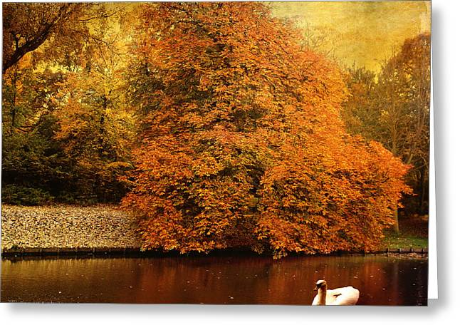 Maine Landscape Mixed Media Greeting Cards - Autumn swan - red leaves Greeting Card by Yvon van der Wijk