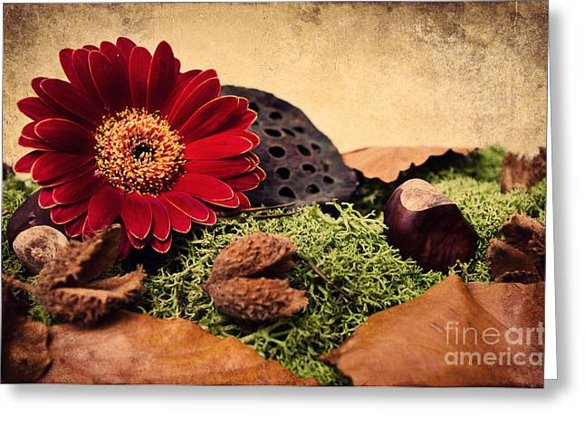 Moss Green Greeting Cards - Autumn time Greeting Card by Angela Doelling AD DESIGN Photo and PhotoArt