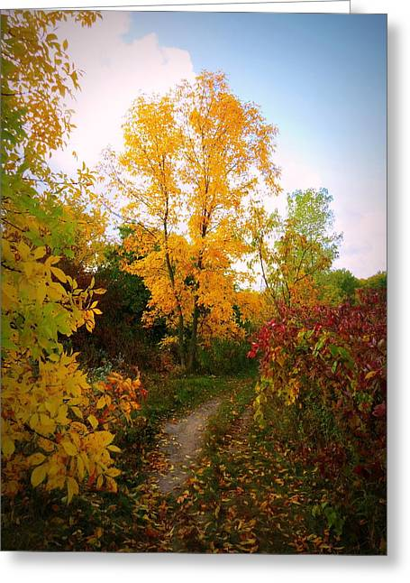Kkphoto1 Greeting Cards - Autumn Trail Greeting Card by Kay Novy