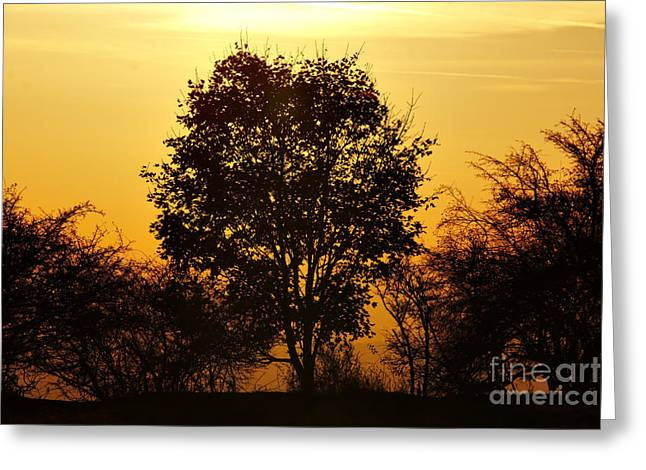 Cheerless Greeting Cards - Autumn Tree And Sun Greeting Card by Michal Boubin