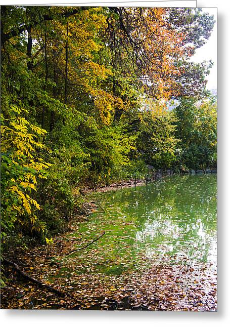 Stream Greeting Cards - Autumn tree colors in Central Park  Greeting Card by Ellie Teramoto