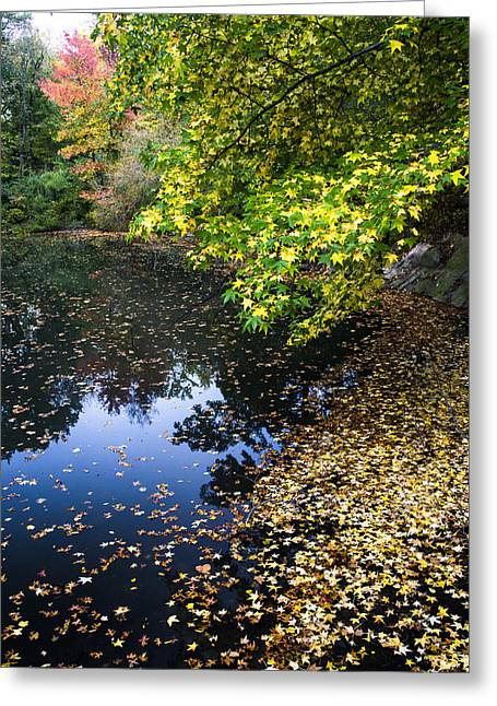 Autumn Tree Colors In Central Park In New York City Greeting Card by Ellie Teramoto