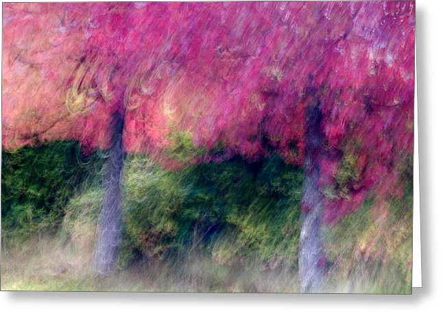 Autumn Trees Greeting Card by Carol Leigh