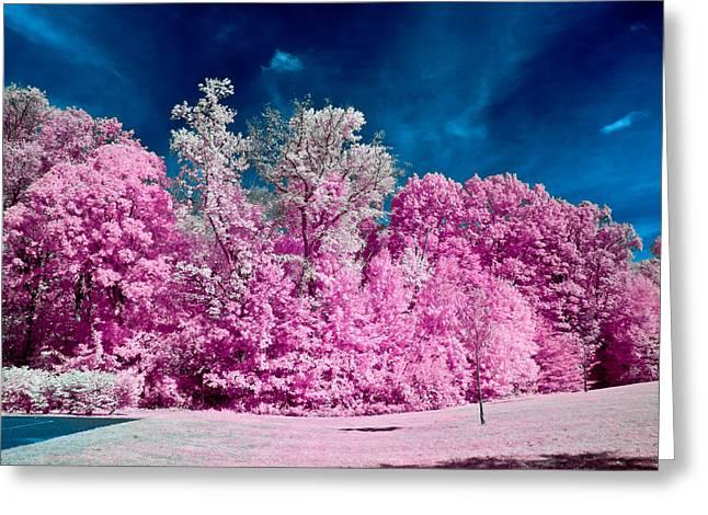 Louis Dallara Greeting Cards - Autumn Trees in Infrared Greeting Card by Louis Dallara