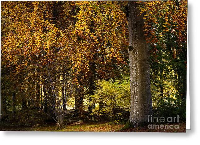 Autumn Trees Greeting Card by Lutz Baar