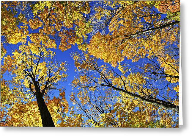 Wooded Park Greeting Cards - Autumn treetops Greeting Card by Elena Elisseeva