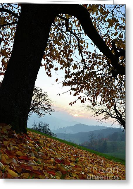 Colourfully Greeting Cards - Autumn View Greeting Card by Bruno Santoro