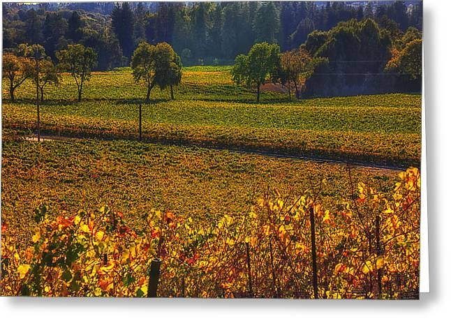 Colors Of Autumn Greeting Cards - Autumn vineyards Greeting Card by Garry Gay