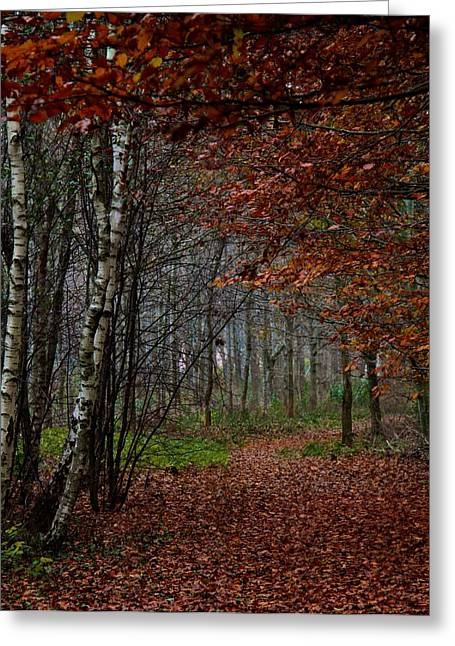 Fallen Leaf Greeting Cards - Autumn Walks Greeting Card by Odd Jeppesen