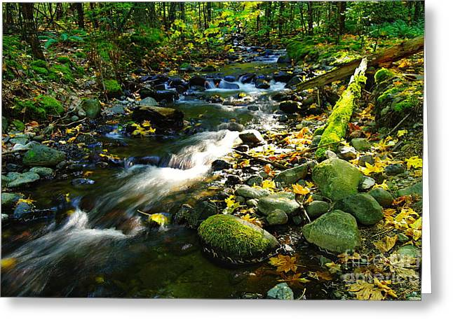 Forest Floor Greeting Cards - Autumn Water  Greeting Card by Jeff  Swan