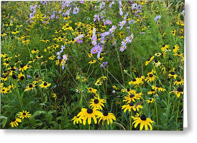 Autumn Wildflowers - D007762 Greeting Card by Daniel Dempster