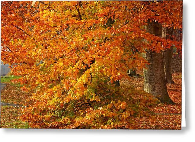 Fall Trees Greeting Cards - Autumn Wonder Greeting Card by Lutz Baar