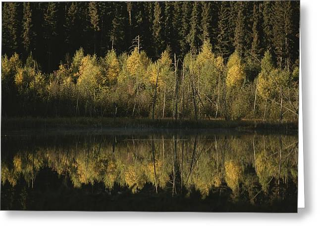 Concept Photographs Greeting Cards - Autumnal Beauty Reflected In A Still Greeting Card by Raymond Gehman