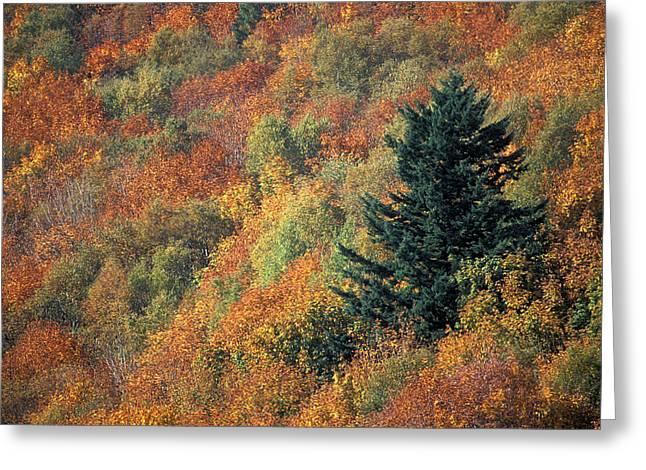 Carotene Greeting Cards - Autumnal Colours Greeting Card by Kaj R. Svensson