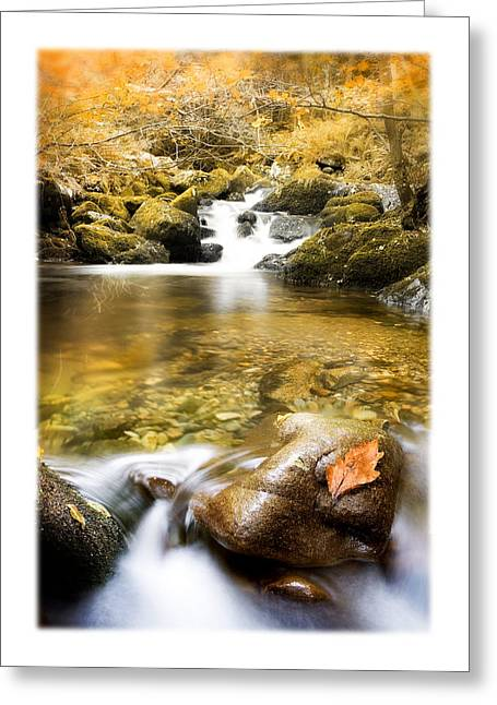 Trout Fishing Greeting Cards - Autumnal Stream Greeting Card by Mal Bray