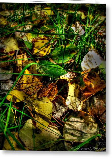 Prescott Greeting Cards - Autumns Aspen Leaves Cover the Forest Floor Greeting Card by Aaron Burrows