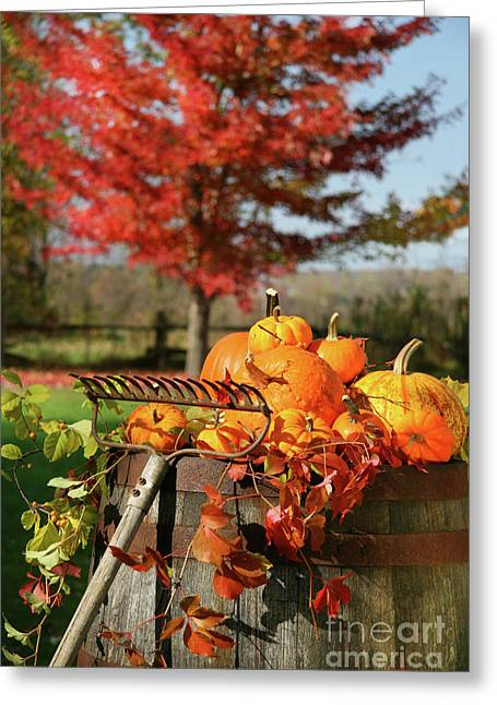 Raking Greeting Cards - Autumns colorful harvest  Greeting Card by Sandra Cunningham
