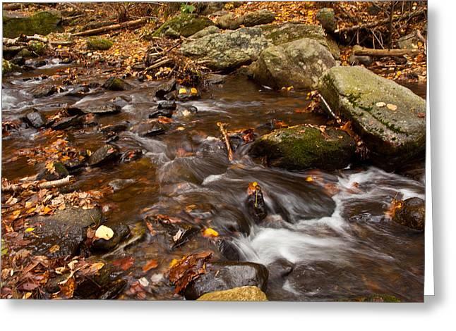 Autumns Creek Greeting Card by Karol Livote